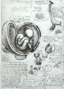 Leonardo_da_Vinci_Studies_of_Embryos