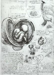 Leonardo_da_Vinci_Studies_of_Embryos