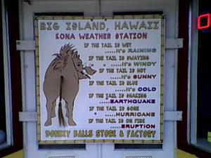 donkey ball weather station