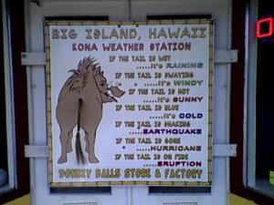 donkey ball weather station